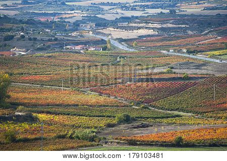 Autumnal landscape with vineyards of Rioja in Spain