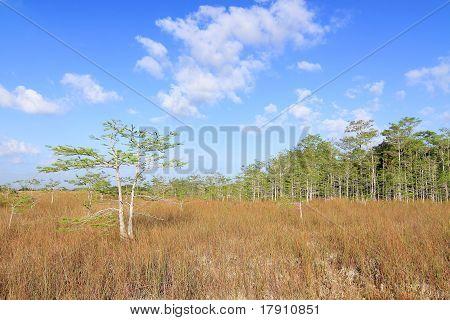 Everglades summer landscape