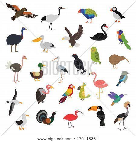 big vector birds set. Bird set cartoon colorful vector illustration. Pictures for kids