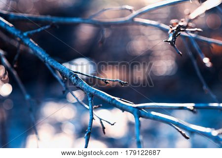 Tree branch with light leak background hd