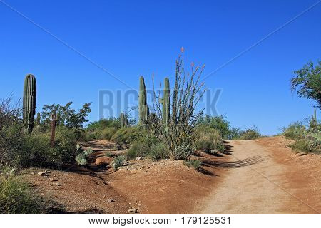 Two hiking trails in Bear Canyon in Sabino Canyon Recreation Area Park in the Sonoran Desert along the Santa Catalina Mountains in Tucson, Arizona.