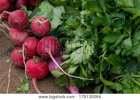 Beet Beta vulgaris vegetable full of nutrition for a healthy lifestyle
