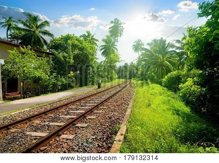 Railroad through green palm forest in Sri Lanka