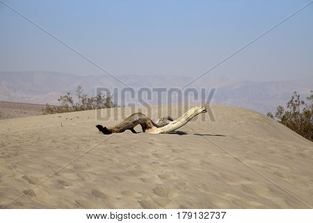 A dead tree branch in the Death Valley desert, California