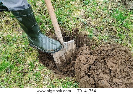 Work in the garden. Man digs a hole to plant a tree.