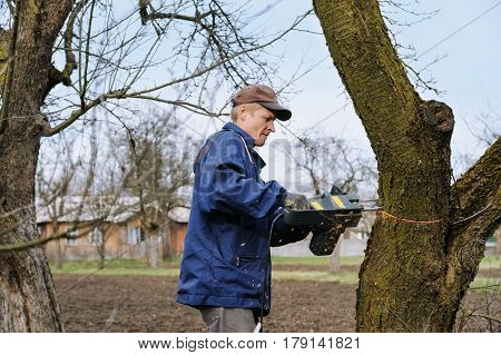 Work in the garden. Man cutting a withered tree with electric chain saw.