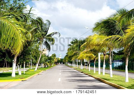 Street Road Or Track With Green Palm Trees, Cozumel, Mexico
