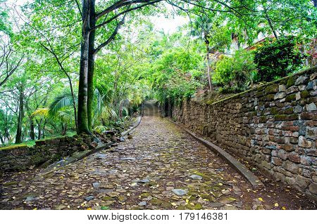 Pebble, Stony Road Among Tropical Jungle Wood Or Rainforest