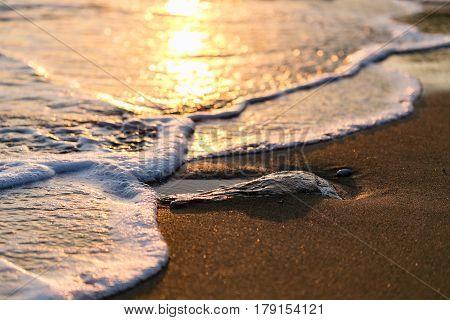 Close Up Of Wave Under Sunset Light