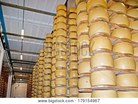The Aging Od Parmesan