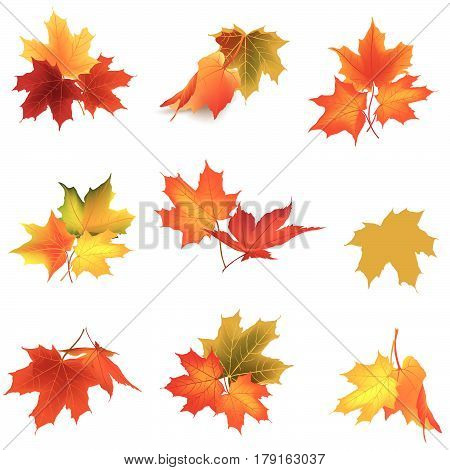 Autumn floral icon set. Fall maple leave. Nature symbol collection isolated on white background.