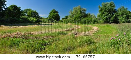 Mow Dry Grass On A Green Meadow Against The Forest