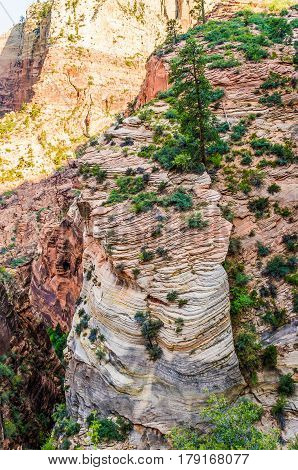 Viewpoint of Zion National Park cliffs from Observation point trail