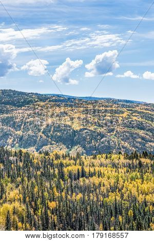 View of golden aspen and pine forests in rocky mountains in Colorado during autumn