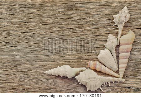 Sea Shell On Wood