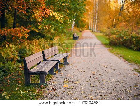 Empty wooden par bench in autumn scenery with fall colors and very shallow depth of field.