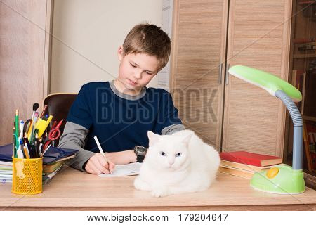 Pre-teen boy doing his homework at home in his room with white cat on his desk.