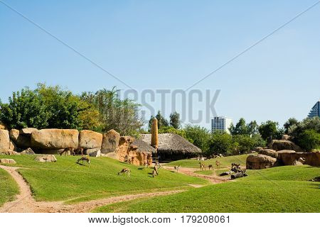 Large aviary with animals on green grass in Valencia zoo on a hot sunny summer day with buildings in the background