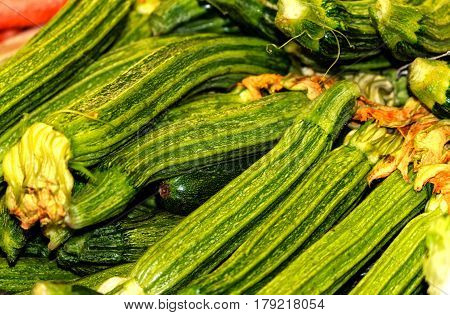 Zucchini Romanenca (Italian Costata squash) also known as Ribbed Roman
