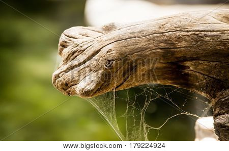 Cob Webb and Spider Web on a Tree log