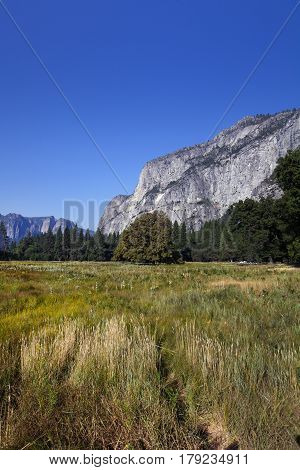 A view of Yosemite valley floor in California