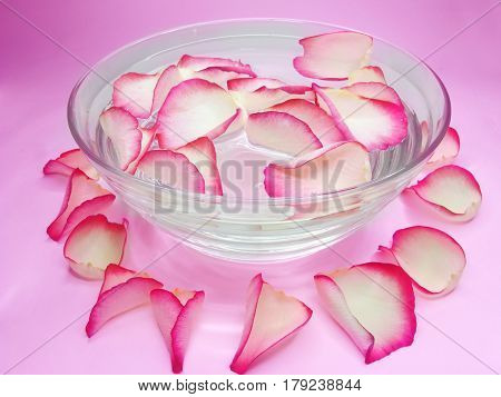 spa red rose essential bowl with water on pink background