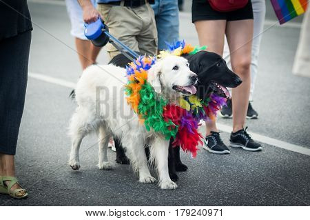 Stockholm, Sweden – July 30, 2016: Black And White Dogs Participating In Stockholm Pride Parade On H