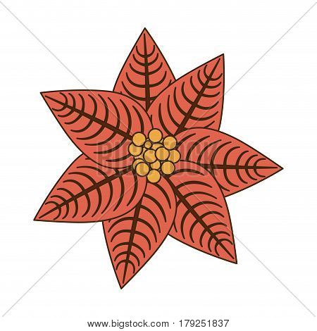 opaque color poinsettia christmas flowers vector illustration