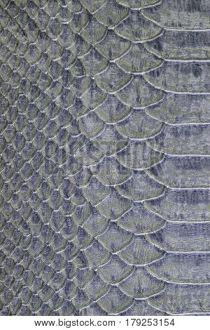 beautiful macro texture of gray snakeskin studio