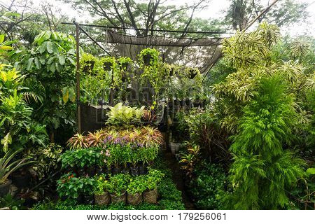 vertical garden arranged by hanging plant and flower sell by florist photo taken in Jakarta Indonesia java