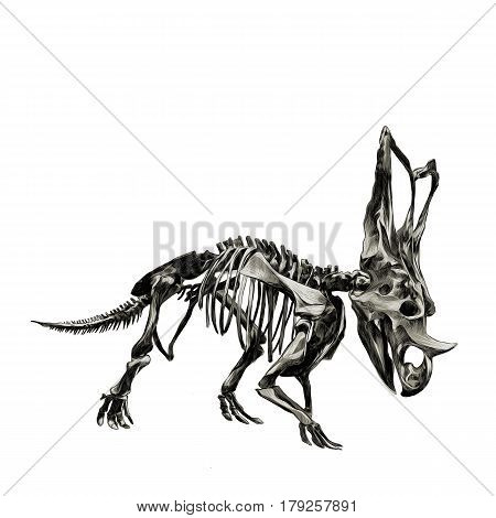 the skeleton of the dinosaur Triceratops color image sketch vector