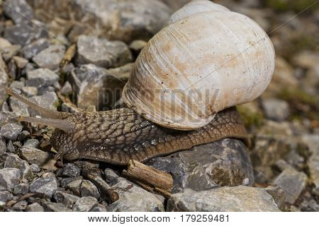 Snake crawling on rocks path , outdoor
