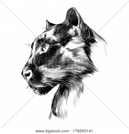 the head is black Panther's profile looking into the distance graphics sketch vector black and white drawing