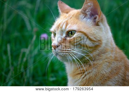 Animal portrait. Portrait of a cat on a summer day