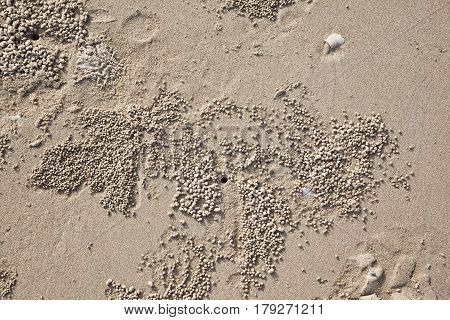 The texture of the sand crab burrows in sandstone