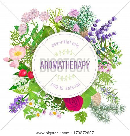 Popular essential oil plants label set. round badge with text. Peppermint, lavender, sage, melissa, Rose, Geranium, Chamomile, oregano etc For cosmetics spa health care aromatherapy, advertising, tag