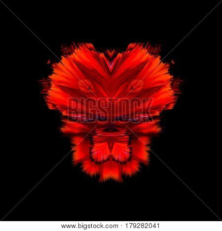 Abstract Fine Art Of Moving Fish Tail Of Betta Fish Or Siamese Fighting Fish Isolated On Black Backg