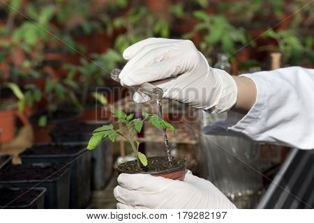 Scientist With Test Tube And Seedling