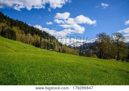 Idyllic landscape in the Alps with fresh green meadows and blooming flowers and snowcapped mountain tops in the background, Nationalpark Berchtesgadener Land, Bavaria, Germany.
