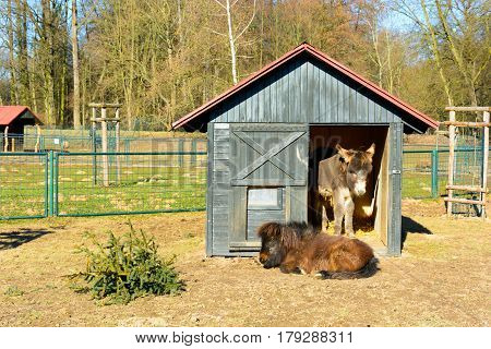 Two donkeys resting in a paddock. Donkey home. Donkey under a shelter. Asinus and Equus
