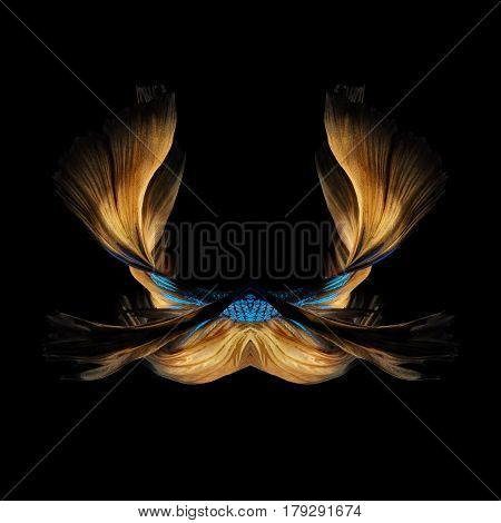 Abstract Fine Art Colourful Fish Tail Free Form Of Betta Fish Or Siamese Fighting Fish Isolated On B