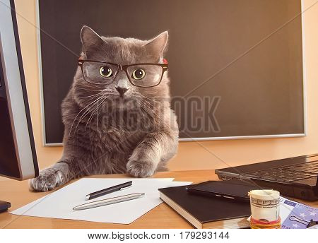 Cat Businessman With Glasses At The Table