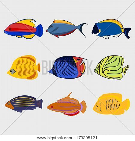 Reef fish icon set on white background, vector illustration