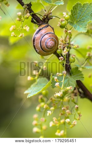 Cosy Garden Scene With Grove Snail