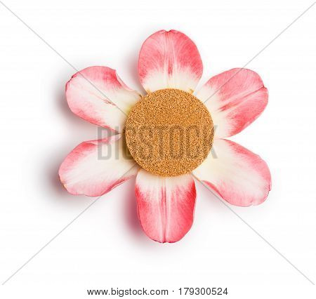 Foundation cushion on six pink petals isolated on white background