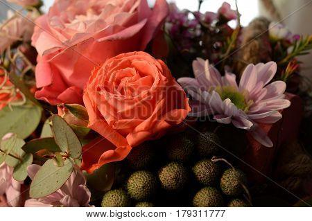 background flowers, flower orange, flower background, orange flower