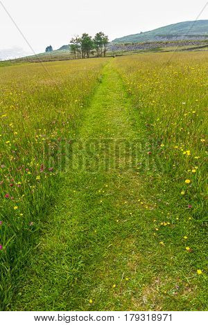 Grassy field with footpath marked by mown grass.