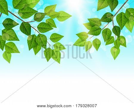 Forest background with sun light coming through the green leaves. Vector illustration. Green backdrop with fresh spring foliage, sparkles and sunbeams