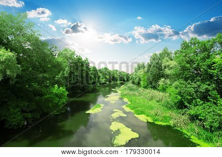 Duckweed on calm river in the forest
