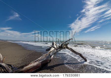 Nice sea landscape with a trunk in the foreground on the beach